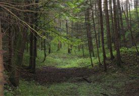 جنگلآئوکیگاهارا