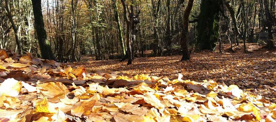 جنگل های النگدره یکی از زیباترین و بهترین مقاصد سفر داخلی در پاییز محسوب می شود