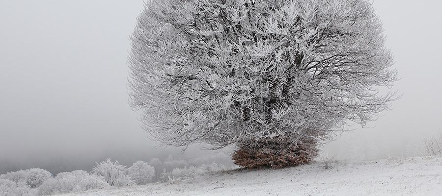 سفر به بلغارستان در زمستان