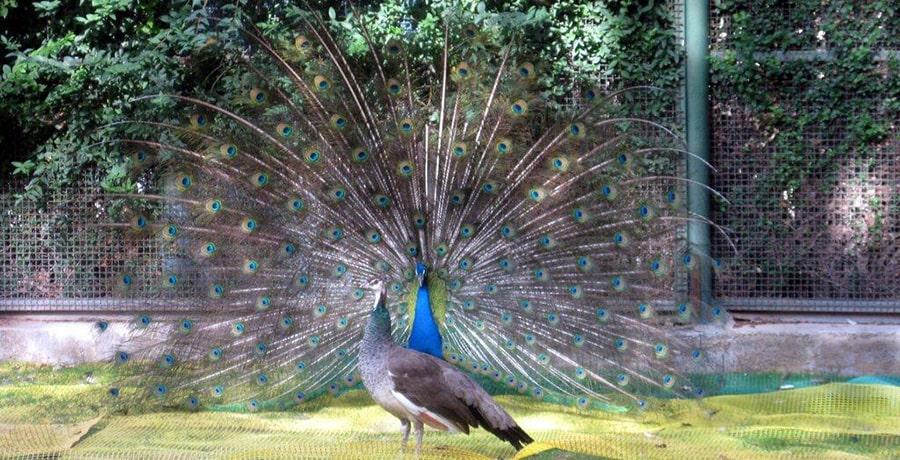 باغ پرندگان، بهترین باغ پرندگان در خاورمیانه