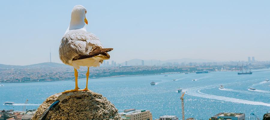 مکان های دیدنی استانبول و آدرس آن ها