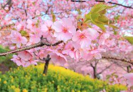 بهنرین مکان برای سفر داخلی در بهار