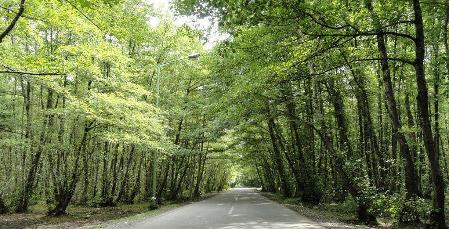 دیدار از جاذبه های زیبای جنگل گیسوم