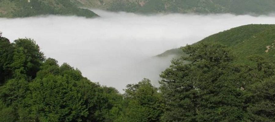 جنگل ابر شگفت انگیز ترین جنگل در ایران