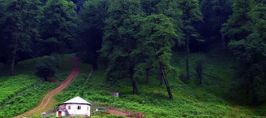 جنگل های دالخانی طبیعت شگفت انگیز