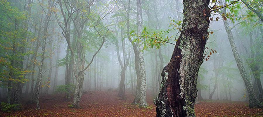 جنگل الیمستان زیباترین ها در ایران
