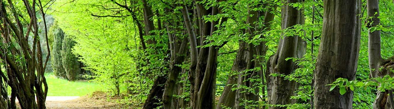 زیباترین جنگل های ایران