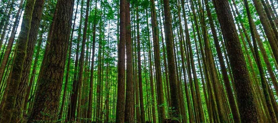 راش جزو زیباترین جنگلهای ایران